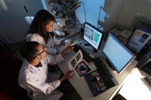 investigadores radón y cáncer de piel